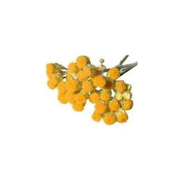 Huile essentielle immortelle (hélichryse) Corse 5 ml